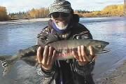 Picture of Dog Salmon, aka Calico Salmon