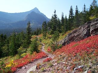 Fall Colors, Glacier National Park
